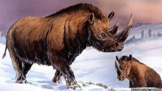 Badak berbulu wol atau <i>Coelodonta antiquitatis</i>