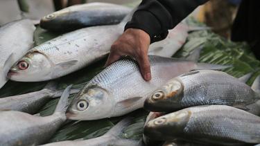 Penjualan Ikan Bandeng.