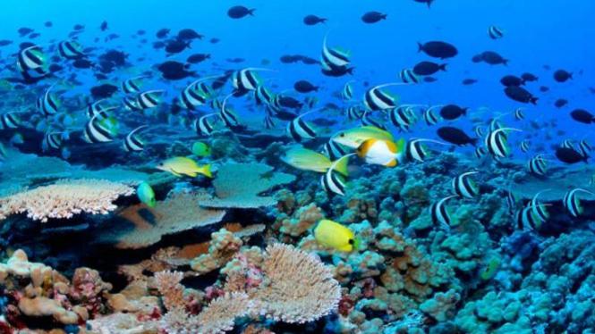 Terumbu karang merupakan sumber makanan dan tempat inggal tak tergantikan bagi berbagai jenis spesies laut