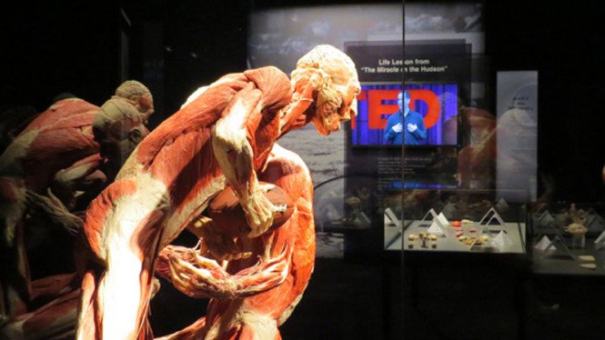 Pameran Organ Tubuh Manusia yang Diawetkan