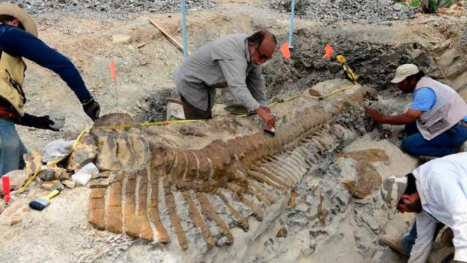 Penemuan fosil ekor dinosaurus di Meksiko