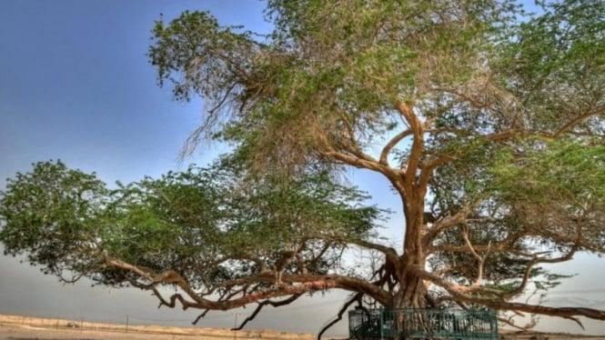 The Tree of Life, Bahrain