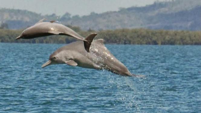 Lumba-lumba berenang di laut.