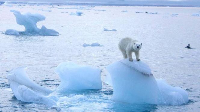 Laut Artik di Kutub Utara