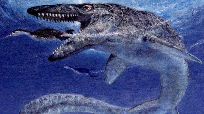 Mosasaurus, reptil laut yang hidup sekitar 85 juta tahun lalu