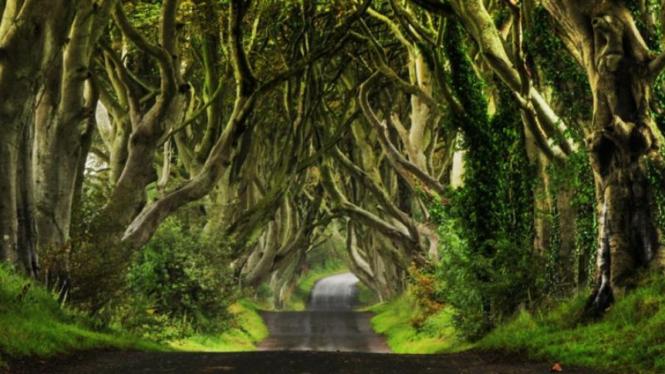 Dark Hedges, jalan peri di irlandia