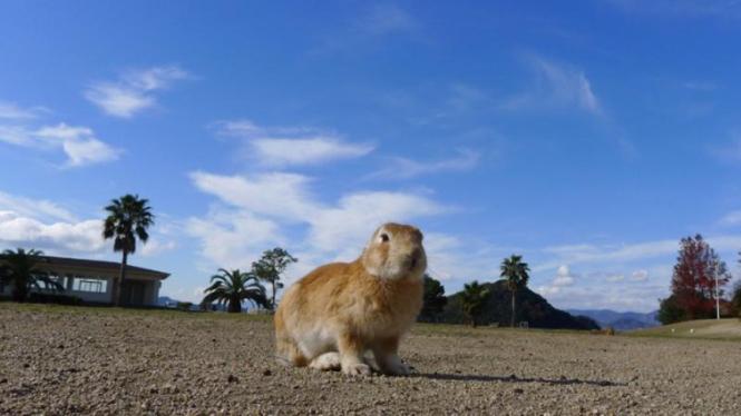 Pulau Okunoshima, Jepang.