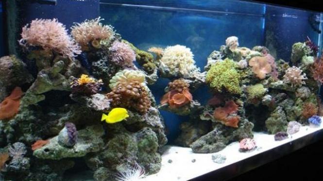 62 Gambar Aquarium Air Laut Kekinian