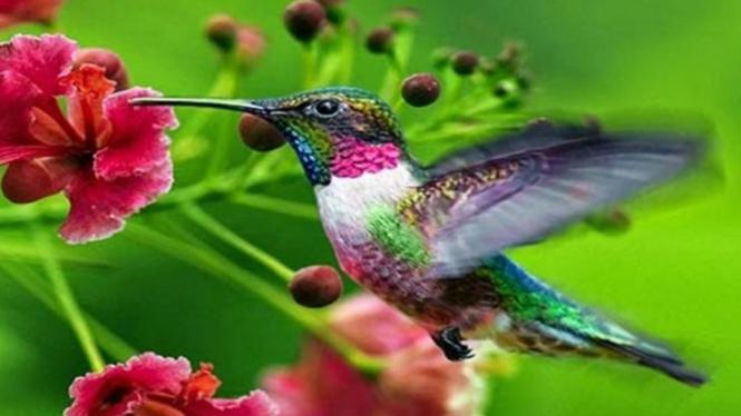 4200 Gambar Hewan Yang Bisa Terbang Terbaik