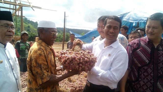Menteri Pertanian Andi Amran Sulaiman meninjau panen raya bawang merah