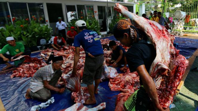 pemotongan hewan kurban /Ilustrasi.