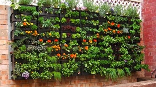 Vertical Garden Kebun Cantik Tanpa Tanah Viva