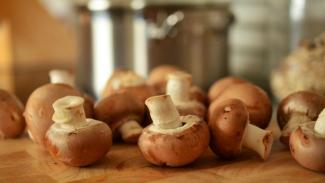 Ilustrasi jamur