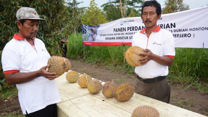 Manisnya Durian Monthong Desa Karanganyar