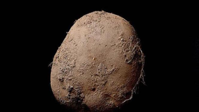 Foto kentang berharga puluhan miliar.
