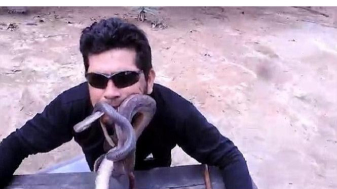 Aksi gila pria memasukkan ular ke dalam mulut.