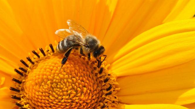 Ilustrasi lebah