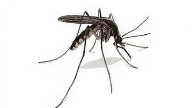 Nyamuk penyebab penyakit.