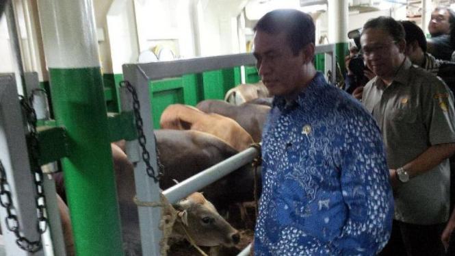 Menteri Pertanian, Amran Sulaiman meninjau kapal ternak Camara Nusantara I