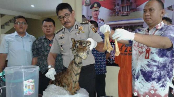 Barang bukti perdagangan kulit Harimau Sumatera di Mapolda Sumatera Selatan