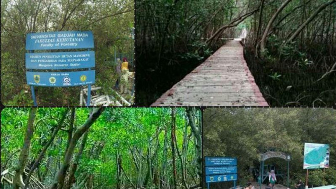 Wisata Mangrove Pemalang