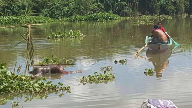 Jasad orangutan ditemukan terapung dalam kondisi membusuk.
