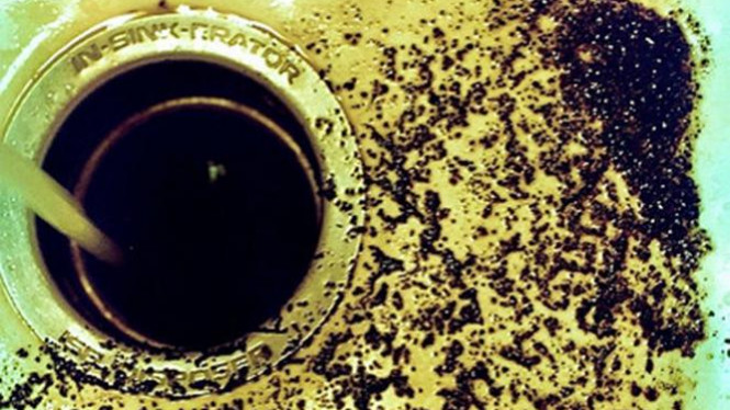 Ampas kopi.