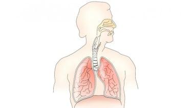 Ilustrasi sistem pernapasan dan paru-paru.