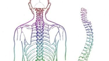 Ilustrasi tulang punggung.