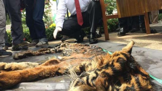 Kulit harimau Sumatera.