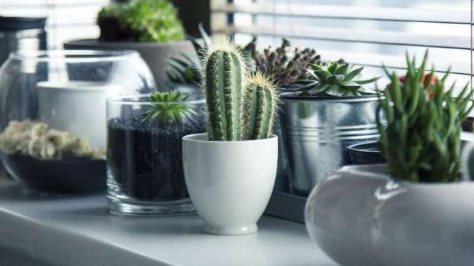 Ilustrasi Kaktus