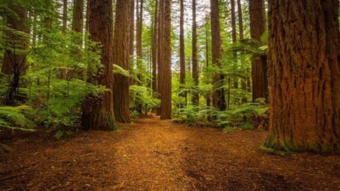 Ilustrasi hutan.
