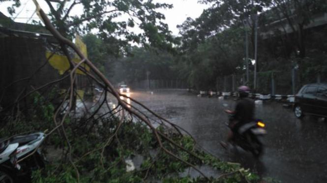 Pohon tumbang di jalanan Jakarta.