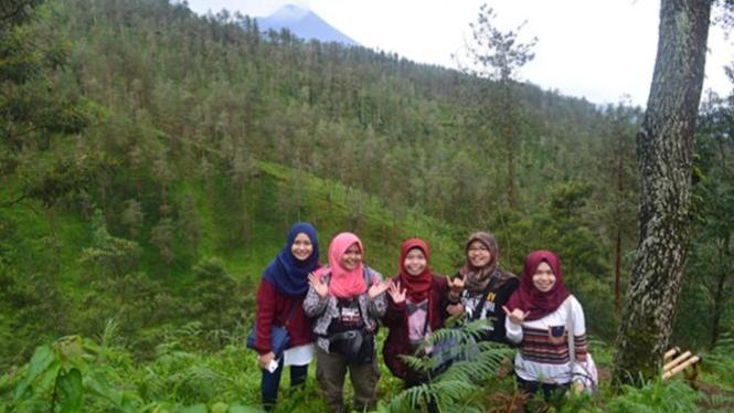 Hutan Pinus Grenden, Magelang.