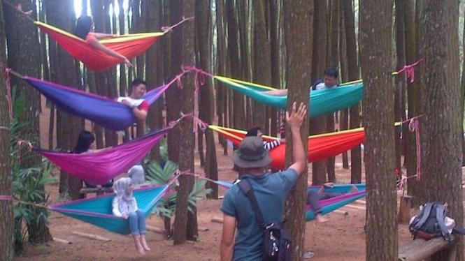 Desa wisata hutan pinus mangunan di