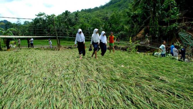 Sejumlah pelajar berjalan di atas tanaman padi yang rusak terendam banjir bandang Sungai Cisarua di Desa Bantarkalong, Kecamatan Warungkiara, Sukabumi, Jawa Barat, Senin (28/11/2016)