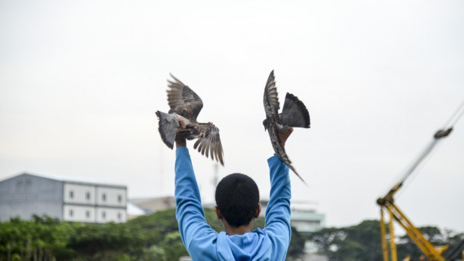 Burung dara atau merpati.
