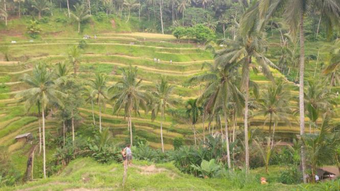 Tegalalang Ubud, Bali.