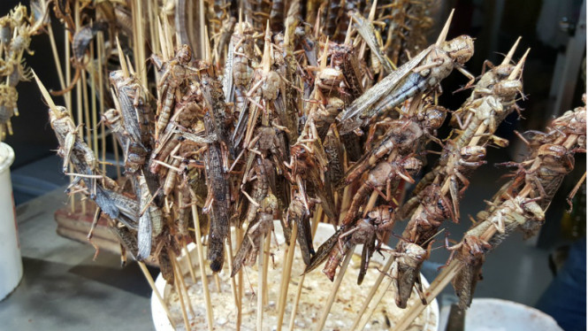 Ilustrasi makanan dari serangga.