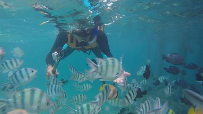 Berenang dengan ribuan ikan.