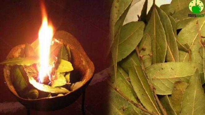 Membakar daun salam.