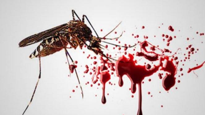 Ilustrasi nyamuk Aedes aegypti.