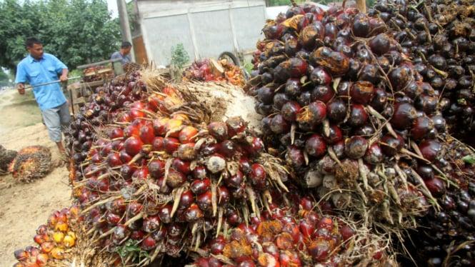Ilustrasi kelapa sawit.