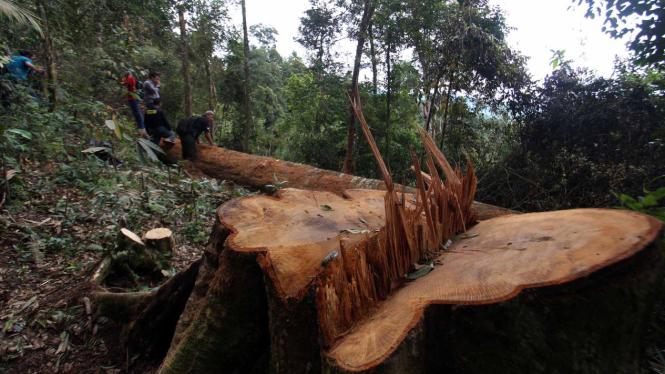 Penebangan pohon di suatu hutan.