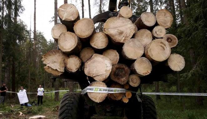 tebang pohon - penebang - penebangan - hutan - kayu