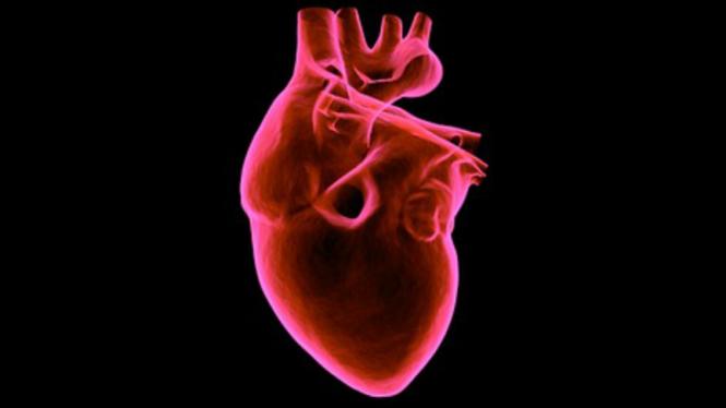 Ilustrasi jantung.