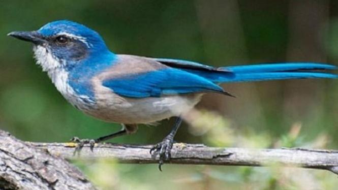Gambar Burung Lucu Gokil