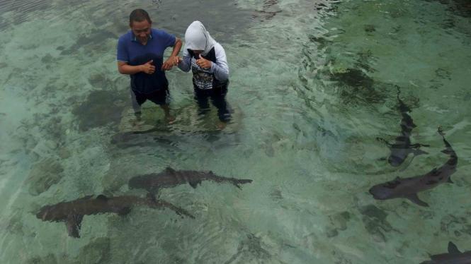 Berwisata di Penangkaran Ikan Hiu Karimunjawa