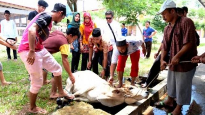 Ilustrasi penyembelihan hewan kurban saat Hari Raya Idul Adha.