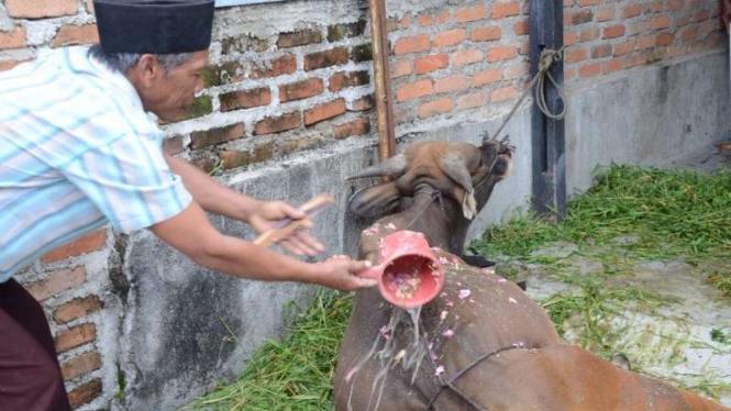 Tradisi memandikan hewan kurban dengan air kembang.
